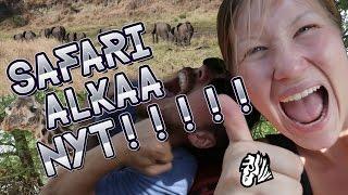Minkälaista ääntä Seeprat Pitävät? 🦄 VLOG 33 | Arusha - Tarangire National Park - Tanzania - Africa