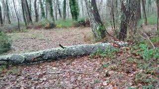 """palombe.org Etat de la palombière après le passage de la tempête """"Fabien"""""""