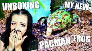 UNBOXING MY NEW PACMAN FROG | BABY PACMAN FROG EATING