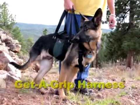 Ast Get A Grip Dog Amputation Harness Product Demo Video