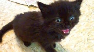 Tiny Kitten - BIG Meow!