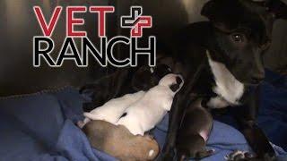 Expectant Momma Dog Saved Hours Before Euthanasia