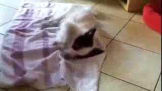 Смотреть онлайн Собака кайфует от дезодоранта