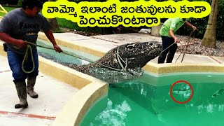 Top 5 Most unusual pets in the world | Bmc facts | Telugu