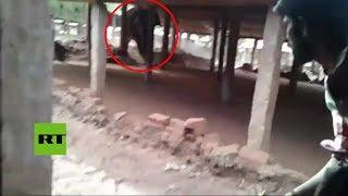 India: Elefante salvaje se siente dueño en una fábrica de ladrillos