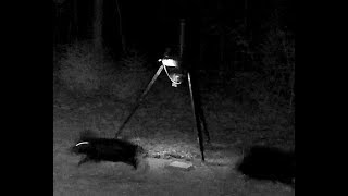 Field Test With Wildgame Innovations Moonshine Light On Hogs?
