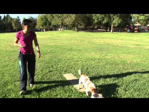 Treat&Train Helps Teach 2 On 2 Off in Agility
