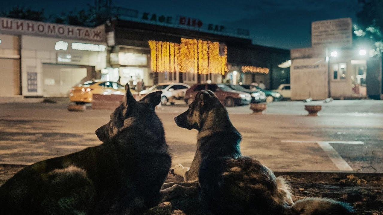 Космические собаки