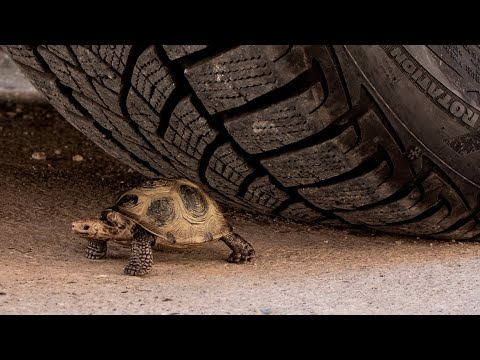 Crushing Crunchy & Soft Things by Car! EXPERIMENT CAR vs TURTLE TOY
