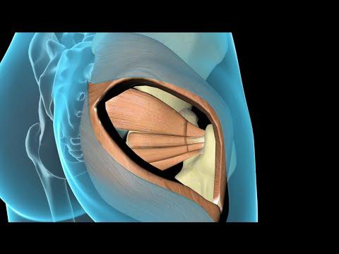 Segni di allungamento della spalla
