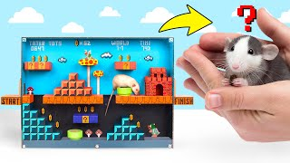 DIY Rat Maze Super Mario Game Style❓🐁