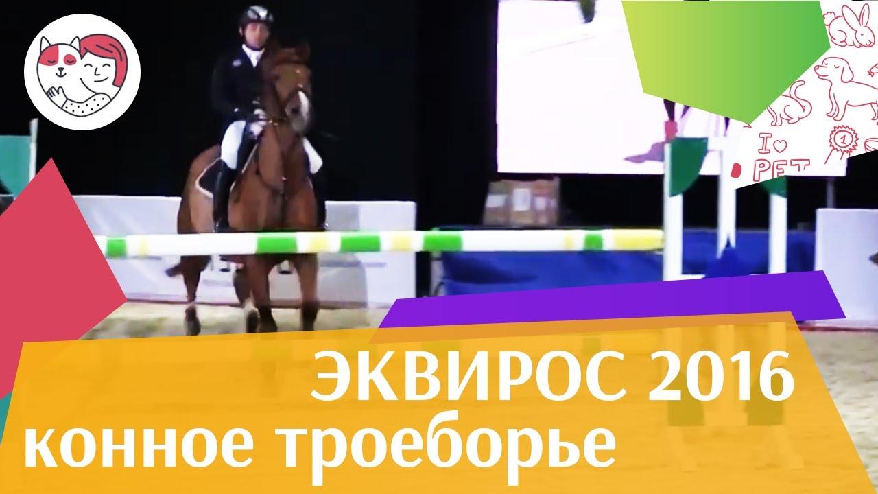 Конное  троеборье  ЭКВИРОС 2016 на ilikepet