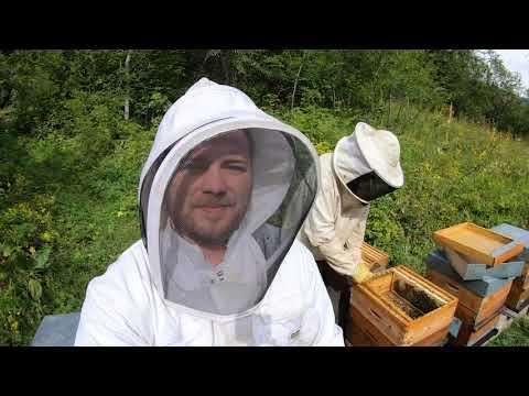 , title : 'Tout connaitre sur les abeilles, le miel et l'apiculture ! (Reportage complet)
