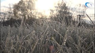 Новгородскую область ждут заморозки