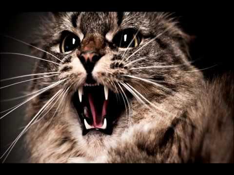 Кошки.  Народные приметы и поверья.