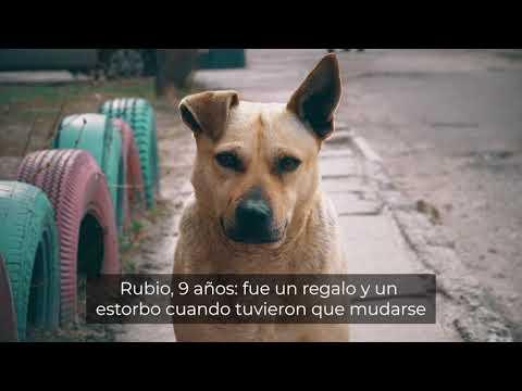 Campaña de sensibilización contra el abandono de animales domésticos-microchip