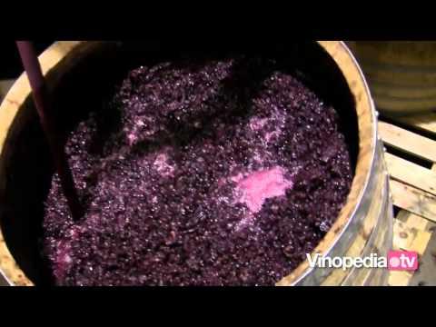 Capítulo 10. Elaboración de un vino tinto