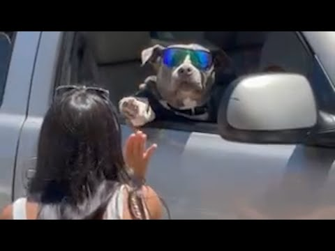 Adorable Dog High Fives Woman