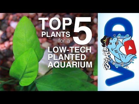 Top 5 Plants for a Low-Tech Planted Aquarium (Video)