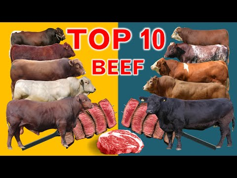 , title : 'Top 10  Cattle Beef Breeds   Highest Average Daily Gain the World from Weaning to Yearling Age