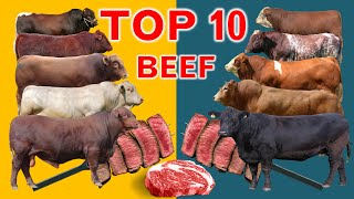Top 10  Cattle Beef Breeds   Highest Average Daily Gain the World from Weaning to Yearling Age