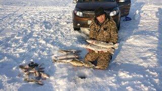 Рыбалка в заповеднике от Руслана и Жаслана/озеро Султанкельды/рыбалка в Астане/Казахстан/GGGkaiserTV
