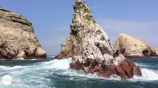 Momentaufnahme bei den Islas Ballestas, Peru