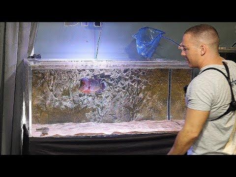 Frank's Tank