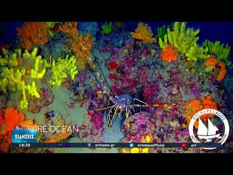 Δάσος από μαύρα κοράλλια στο Β.Α Αιγαίο | 02/10/2021 | ΕΡΤ
