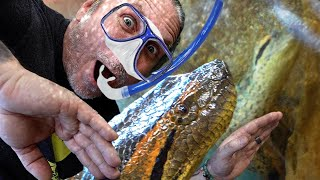MY TINY ANACONDA GOES FOR A SWIM!!! AND I JOIN HER!! | BRIAN BARCZYK