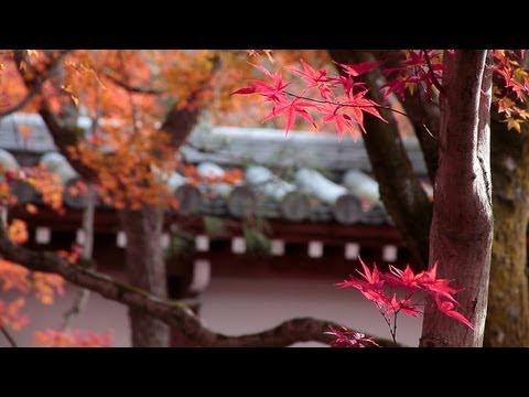 Philosopher's Path, Kyoto [哲学の道/京都]