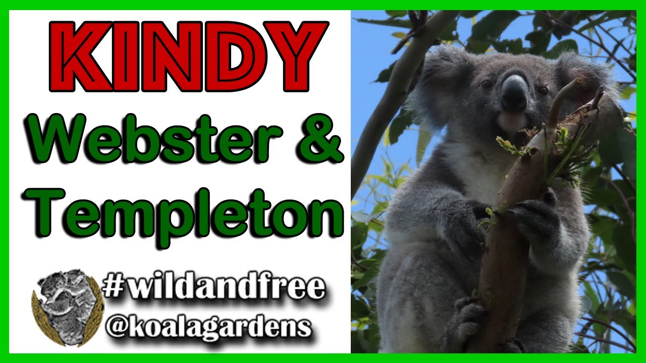 Kindy arrival – Webster and Templeton