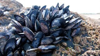 Где ловить в азовском море мидий