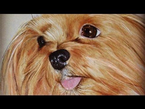 Comment dessiner un chien yorkshire comment dessiner - Dessiner un yorkshire ...