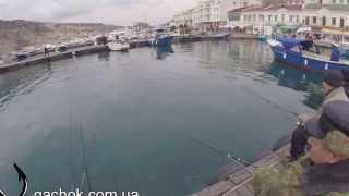 Стоимость рыбалки в балаклаве