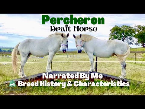 , title : 'Gentle Giant Percheron Draft Horse Characteristics And History | Narrated By Me | SoTheAdventure
