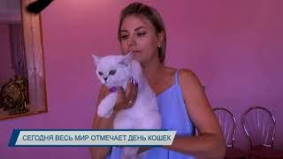 Сегодня весь мир отмечает день кошек