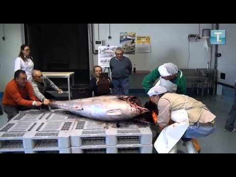 Los 30 días del atún rojo - Restaurante Rivas, Vega de Tirados, Salamanca