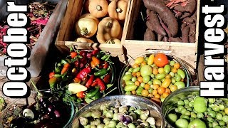 Big October Vegetable Garden Harvest (2018): Local Food At Its Best!