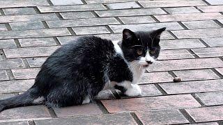 野良だった頃のモナカちゃん~口パクしてるね Cat Monaka when she was a stray   Kholo.pk