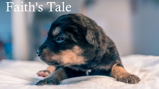 RESCUE OF PUPPIES & MOTHER IN SNOW - 'FAITH'S TALE'