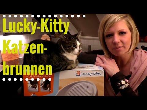Bester Katzenbrunnen!! Lucky Kitty Keramikbrunnen für Katzen!