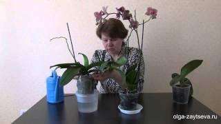 Как правильно поливать орхидею?