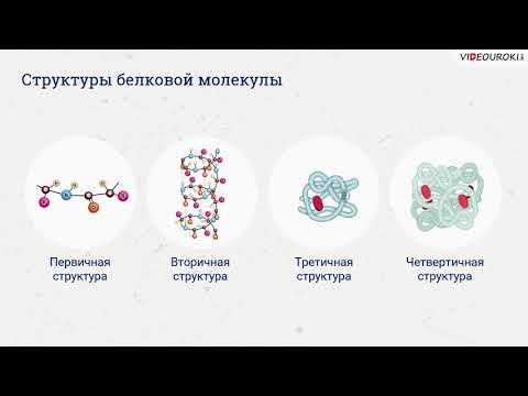 "Видеоурок по биологии ""Белки"""