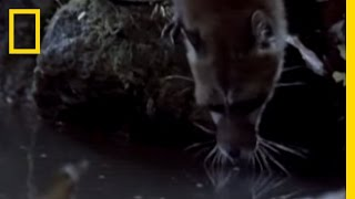 Aquatic Genet - Hunting Technique