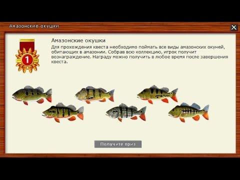 Русская Рыбалка 3.99 Квест Амазонские окушки