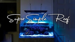 How To Setup a Super Simple Saltwater Reef Aquarium for Beginners