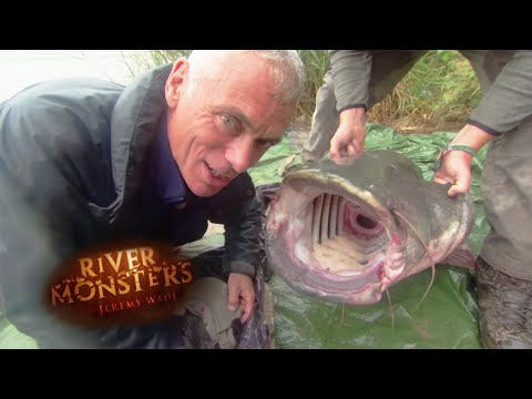 Catching An Even Bigger Wels Catfish