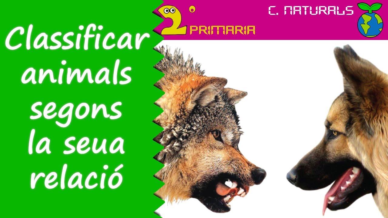 Ciències de la Naturalesa. 2n Primària. Tema 4. Classifiquem els animals segons la seua relació