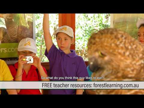 ForestLearning: Teaching for a Sustainable Industry